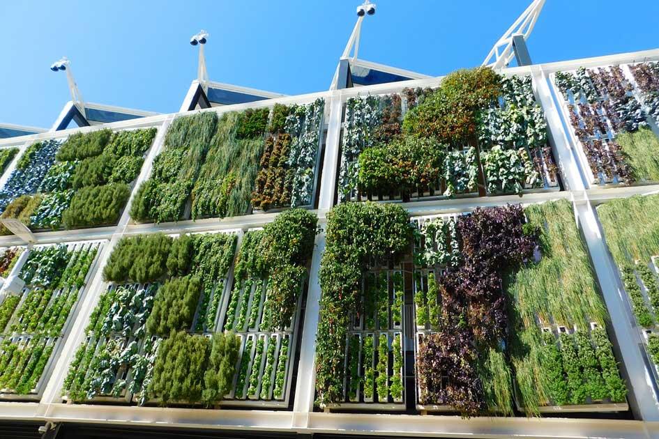 construir muro verde