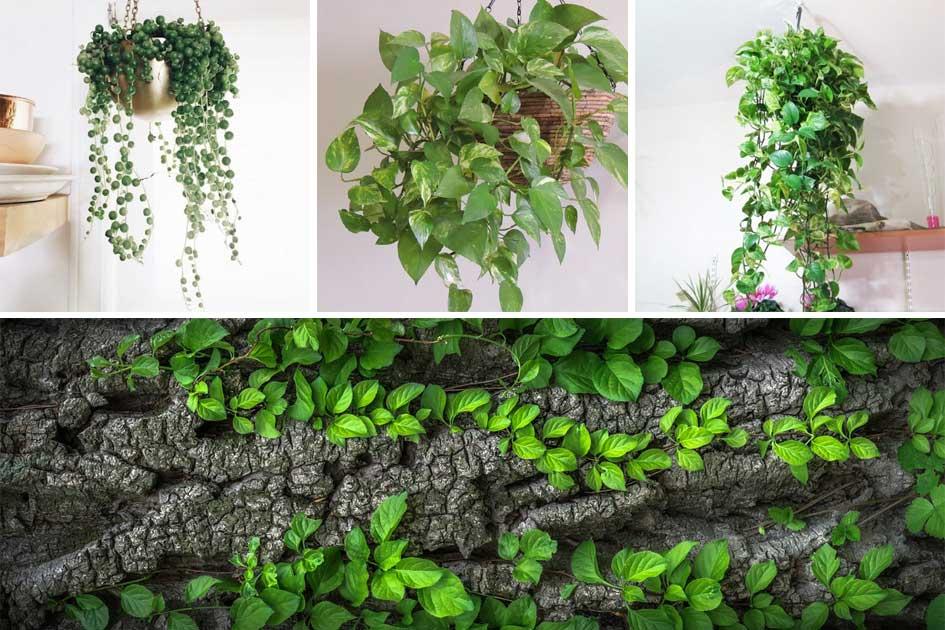 Las mejores plantas colgates para interior y exterior y - Plantas artificiales para exterior ...