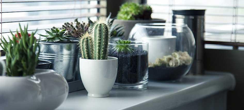 plantas de interior nombres