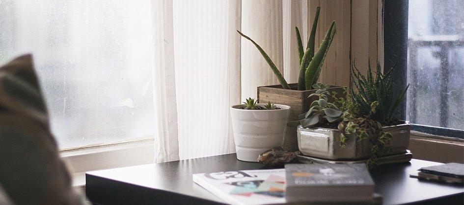 Consejos para iluminar correctamente las plantas