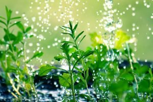 Fertilizantes para cesped
